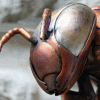 Copper Bee sculpture head. Made by Thrussells.