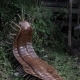 giant carboniferous period millipede sculpture made from steel by Thrussells