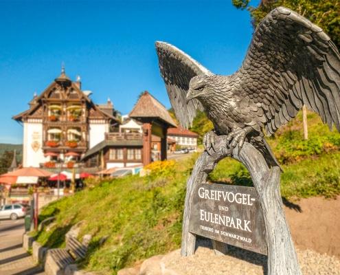 Triberg Eagle Thrussells - Greifvogel Und Eulenpark - Germany