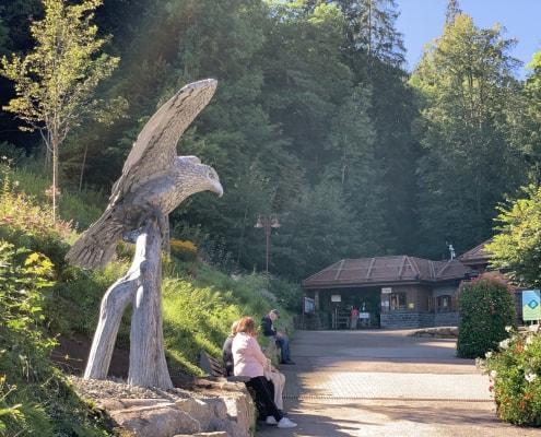 Triberg-Eagle-Thrussells-Greifvogel-Und-Eulenpark-Germany.-Waterfalls-Entrance